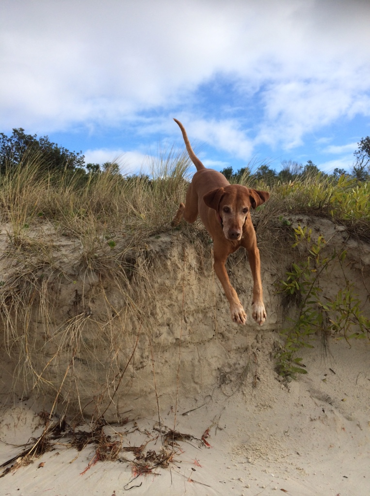 Mali Jumping for Joy on Callala Beach